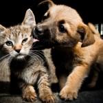 gato-cachorro-amor-opostos-1416428238016_615x470